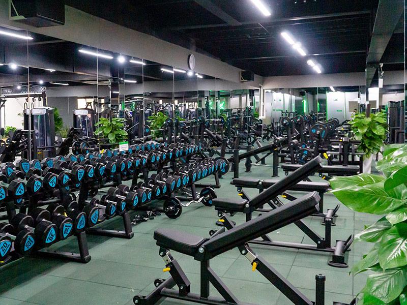 Mẫu thiết kế phòng gym ấn tượng với cây xanh trang trí